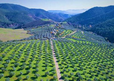 finca_solmark_alojamiento_rural_panoramica_olivos