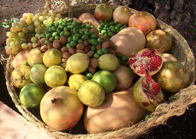 finca_solmark_i_jornada_puertas_abiertas_cesta_de_frutas