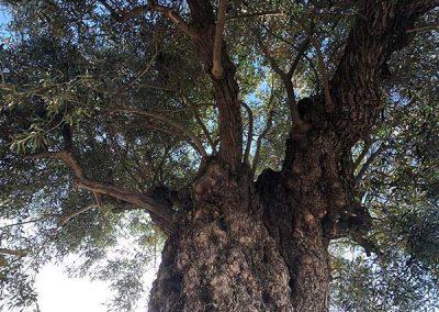 finca_solmark_i_jornada_puertas_abiertas_medioambiente_ecologia_turismo_07