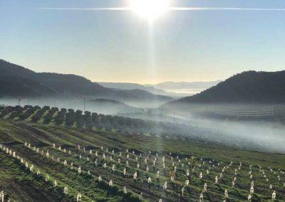 ekologiska avokadorna från Carratraca - Finca Solmark