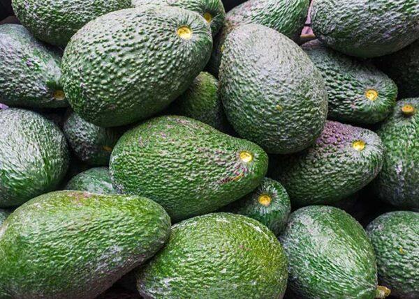 Ekologisk Avokado Hass 4kg låda - Finca Solmark
