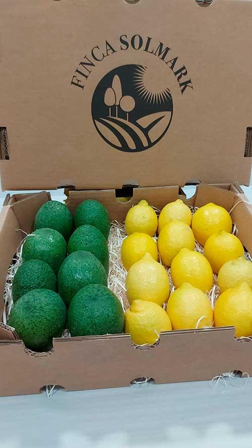 Ekologisk Avokado och Citron - Finca Solmark