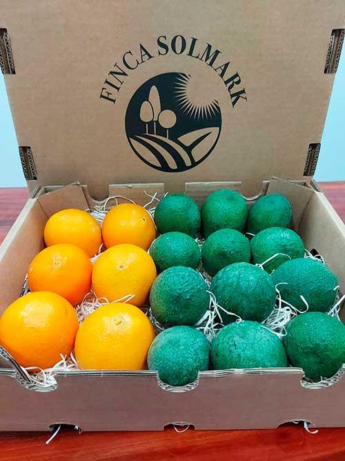 Ekologisk apelsin och avokado - Finca Solmark