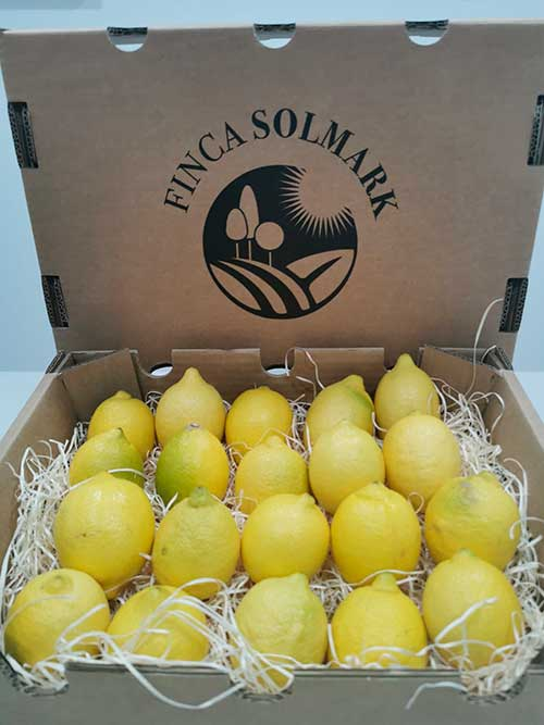 Ekologisk Citron - Finca Solmark