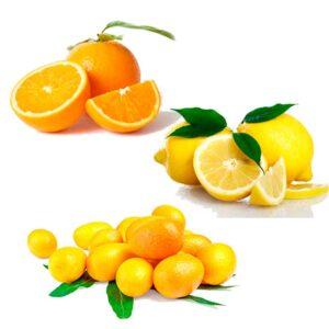 Ekologisk Apelsin och Citron och Kumquat - Finca Solmark